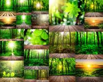 阳光与树木摄影高清图片