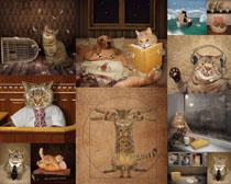搞怪猫咪拍摄时时彩娱乐网站