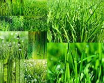 绿草地摄影高清图片