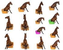 马与沙发摄影时时彩娱乐网站