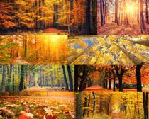 秋天叶子树木风景摄影高清图片