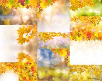 枫叶摄影高清图片