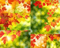 漂亮的树叶摄影高清图片