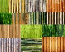 绿色竹子摄影高清图片