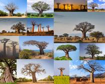 树木植物摄影高清图片