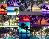 海滩椰树摄影高清图片