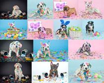 涂颜料的狗摄影时时彩娱乐网站