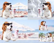 冰淇淋时尚狗狗摄影时时彩娱乐网站