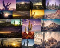 仙人掌与风景摄影高清图片