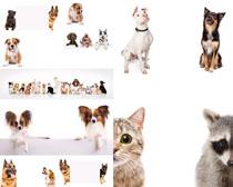 宠物狗猫拍摄时时彩娱乐网站