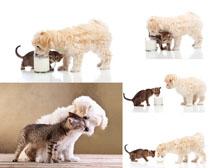 狗狗与猫咪拍摄时时彩娱乐网站