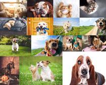 聪明的宠物狗狗摄影时时彩娱乐网站