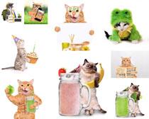 食物与猫咪摄影时时彩娱乐网站