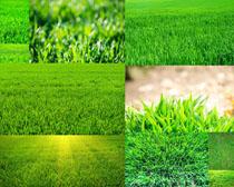 绿色草地植物拍摄高清图片