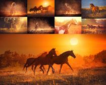 夕阳下奔跑的马摄影时时彩娱乐网站