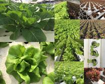 蔬菜植物摄影高清图片