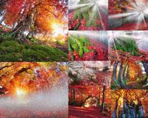 漂亮的树木景观摄影高清图片