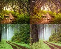 森林照片柔美效果PS調色動作