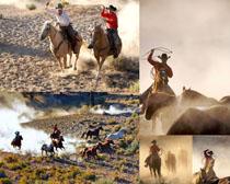 奔跑的野马摄影时时彩娱乐网站