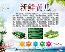 新鲜黄瓜果蔬宣传海报矢量素材