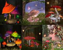 彩色绘画蘑菇摄影高清图片