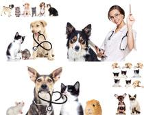 宠物狗与医生摄影时时彩娱乐网站