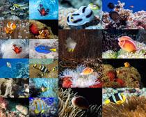 海洋鱼类摄影时时彩娱乐网站
