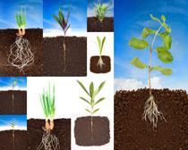 土壤与小苗摄影高清图片