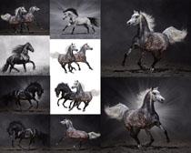 奔跑的野马拍摄时时彩娱乐网站