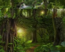 绿色森林风景摄影高清图片
