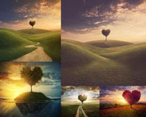 草地上的爱心树摄影高清图片