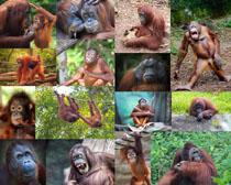 顽皮的猴子摄影时时彩娱乐网站