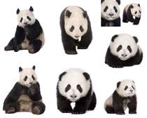 大熊猫摄影时时彩娱乐网站
