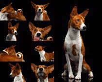 动物狗摄影时时彩娱乐网站