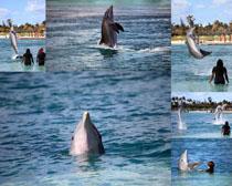 海豚海洋生物摄影时时彩娱乐网站