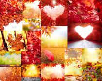 红色枫叶摄影高清图片