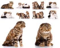 可爱猫咪写真摄影高清图片