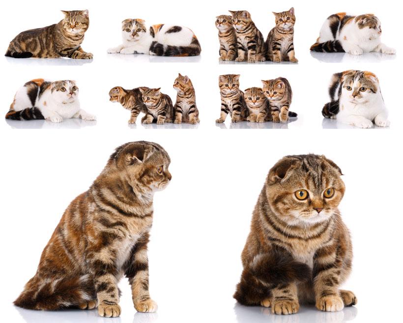 猫咪可爱动物宠物拍摄摄影