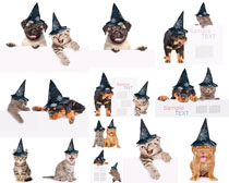 戴帽子狗狗摄影高清图片