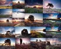 美丽的风景树木摄影高清图片