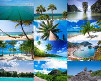 海岛椰树风景摄影高清图片