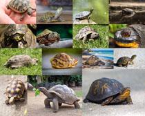 大海龟摄影高清图片