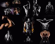 健身肌肉男摄影时时彩娱乐网站
