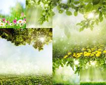 春天绿色植物美景摄影高清图片