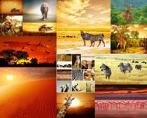 森林动物写真摄影时时彩娱乐网站