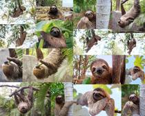 热带猴摄影高清图片