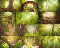 绿色森林树木摄影高清图片