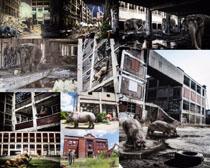 废弃房屋与动物摄影时时彩娱乐网站