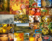 秋天景观拍摄高清图片