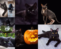 黑色猫咪摄影高清图片